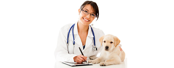 Nuheart - Heartworm Medication Review