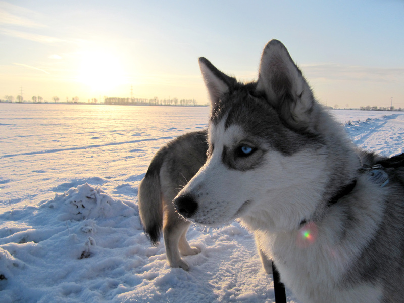 Prepare Your Pets for The Cold